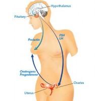 Borstvoeding Menstruatie
