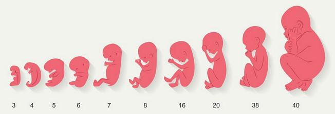 40 Weken Zwanger