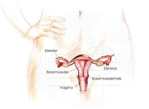 Zwangerschap Week 0 1menstruatie Tot Ovulatie